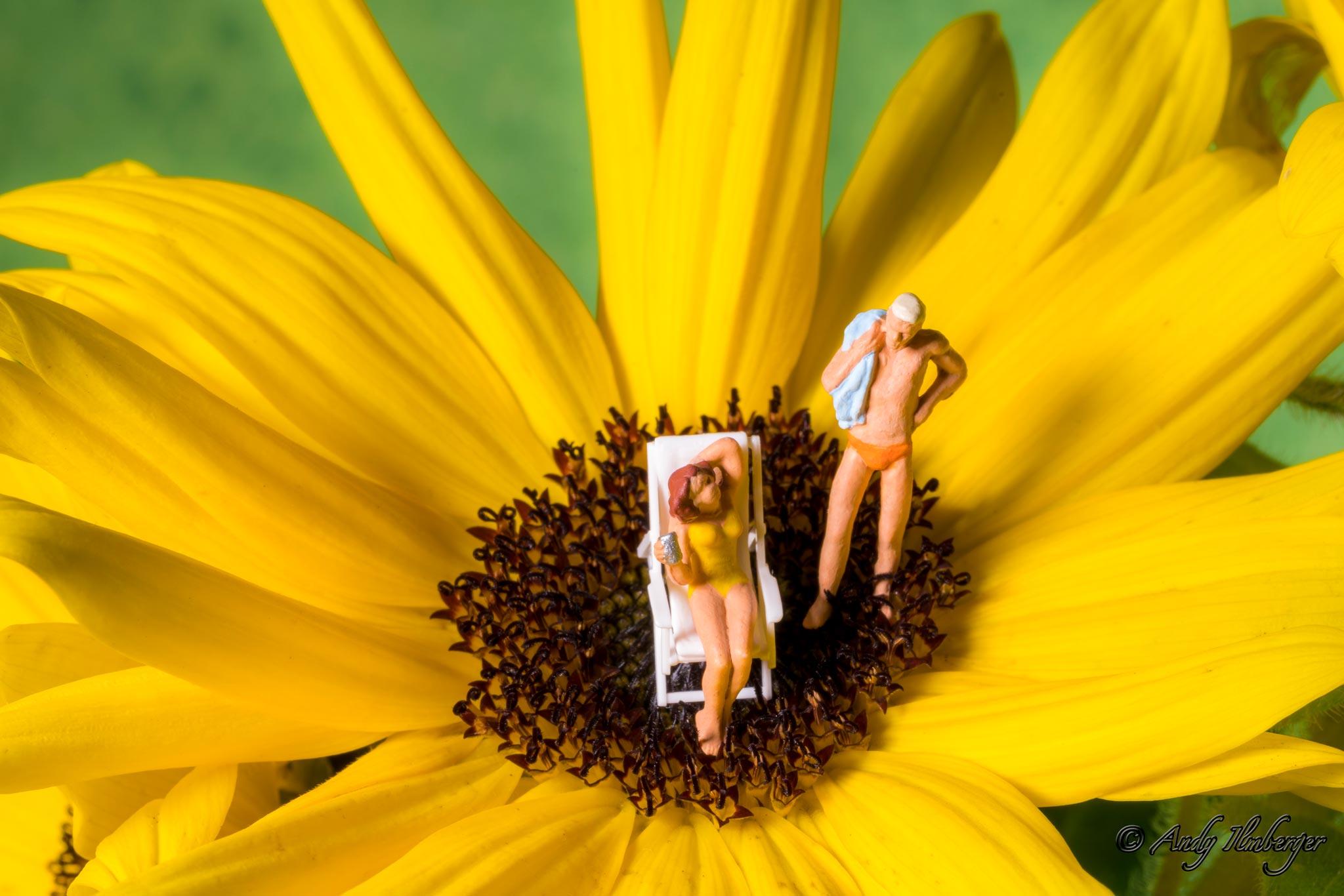 H0-Helden - Sonnenblumenbad - H0-Figuren in Szene gesetzt von © Andy Ilmberger im Kleine-Helden.Club