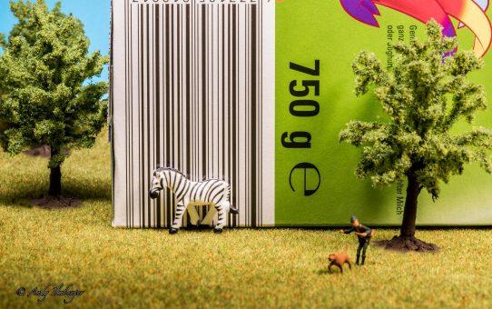 Camouflage-Zebra auf der Flucht