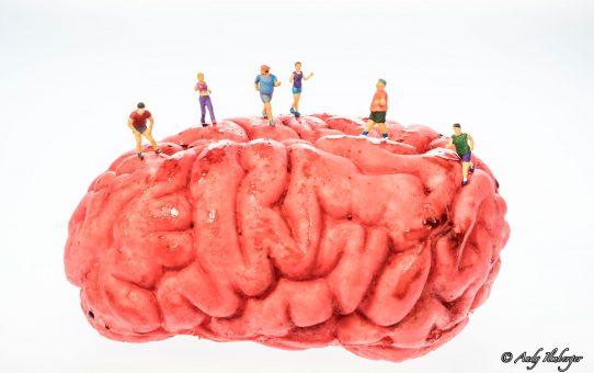 Kleine Helden beim Gehirnjogging