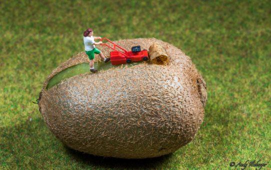 Kiwi-Schäler auf Art der kleinen Helden